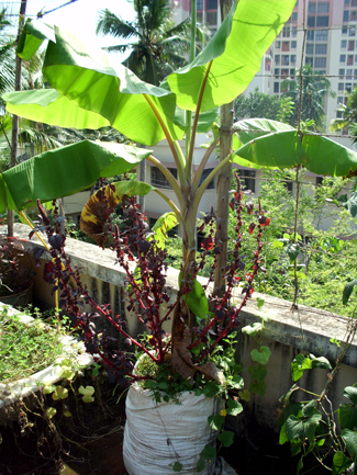 Trivandrum general discussions page 210 skyscrapercity for Terrace vegetable garden kerala