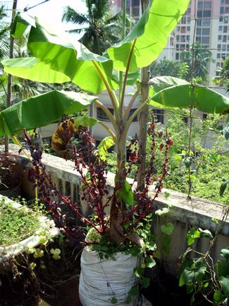 Terrace Turns Garden In 18000 Houses