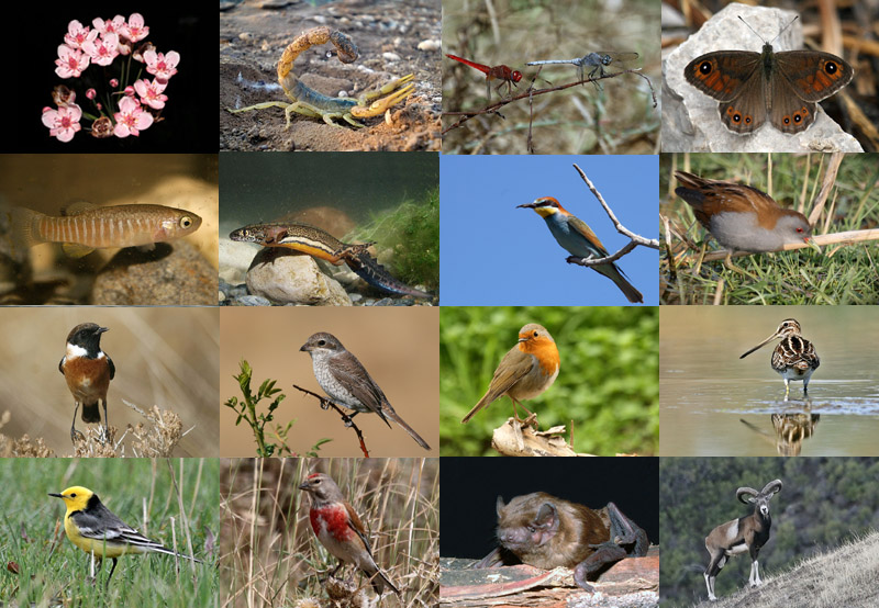 bio diversity Biodiversity is the sum of all the different species of animals, plants, fungi and microbial organisms living on earth and the variety of habitats in which they live.
